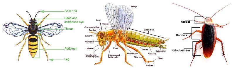do vui ve con trung 1 - Đố vui về côn trùng