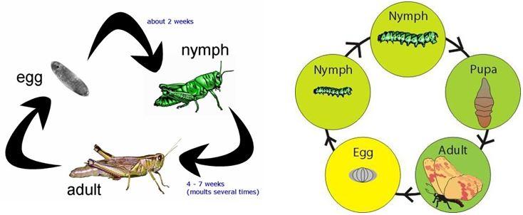 do vui ve con trung 7 - Đố vui về côn trùng