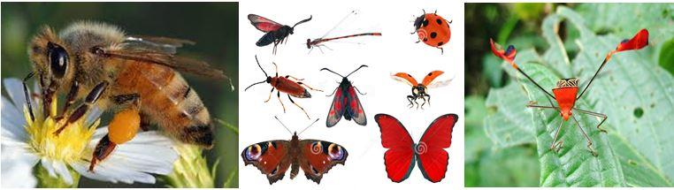 do vui ve con trung 9 - Đố vui về côn trùng