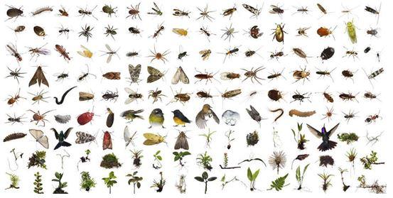do vui ve con trung - Đố vui về côn trùng
